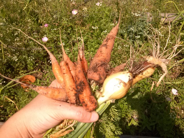 Overflowing handful of carrots and onion